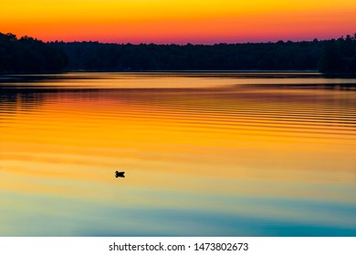 LAKE SUNSET IN CANADA - Beautiful Canadian scene of bird/loon swimming by gorgeous sunset, with reflection of pink, orange and yellow colors in sky. Peaceful cottage relaxation. Muskoka, Canada