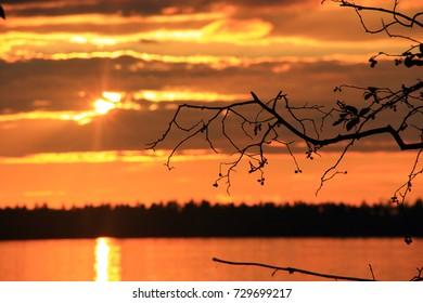 Lake sunset through branches