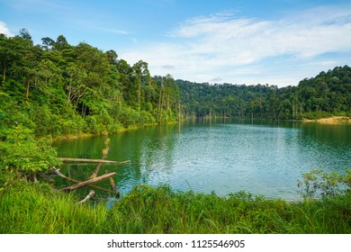 Lake surrounded by beautiful green