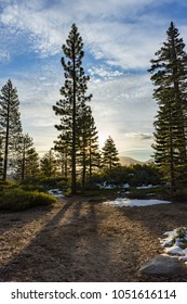 Lake Tahoe sunrise on some pine trees