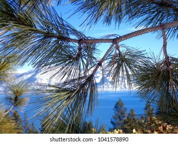 Lake Tahoe in Winter through branches