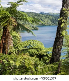 Lake Tarawera views with ferns