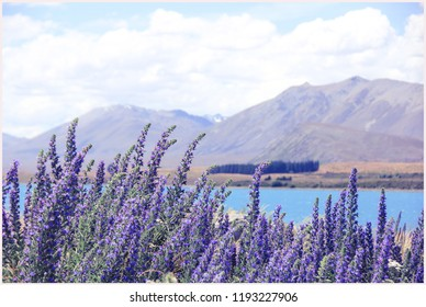 Lake Tekapo in New Zealand