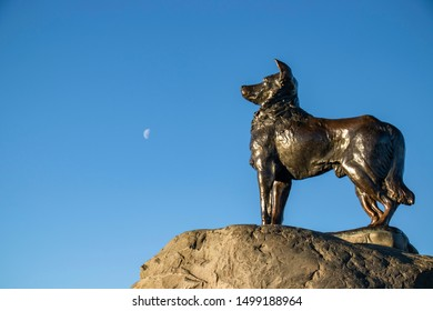 Lake Tekapo, New Zealand – Jun, 2019: Mackenzie Sheep Dog, The bronze statue of the dog on the shores of Lake Tekapo in a beautiful day with blue sky and the moon background. Spaces for your text.