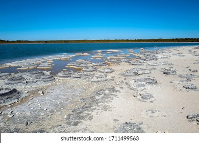 Lake Thetis, a saline coastal lake in Western Australia.  The thrombolites at Lake Thetis were built by one of the earliest life forms on Earth