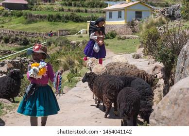 LAKE TITICACA, PERU - FEB 5: Scene of young shepherds on Isla Amantani, 2017 as they herd their sheep through the island.