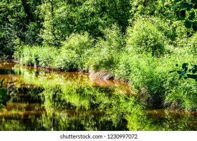 A lake with trees and bushes and reflections