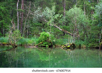 lake with trees and moss in the forest