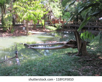 Lake with trees on the banks in Sacaca Museum, Macapa, Brazil