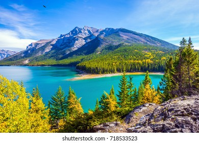 The lake with turquoise water is surrounded by coniferous forests. Lake Two Jack in the Rocky Mountains of Canada. The concept of ecological and active tourism