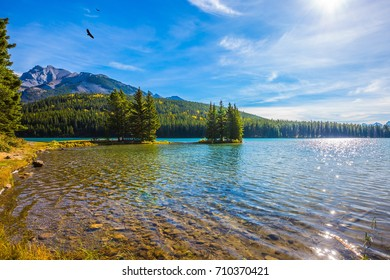 Lake Two Jack in the Rocky Mountains. Golden Autumn in Canada. Pine trees on little island in the lake. The concept of ecological and active tourism