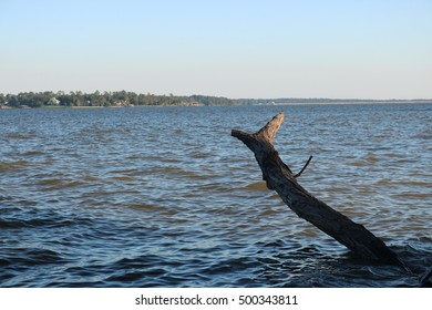 Lake view with old tree stump