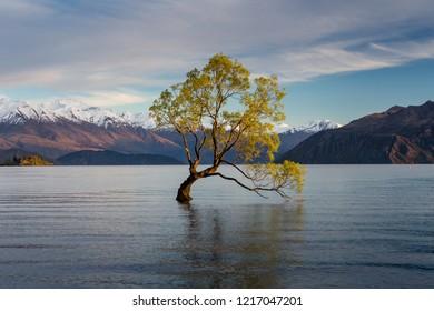 lake wanaka in NewZaland