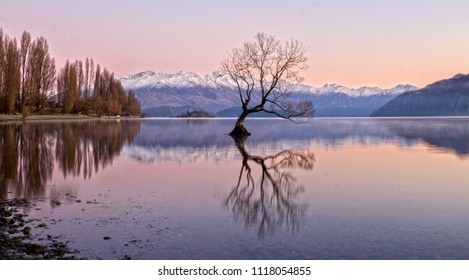 Lake Wanaka and the tree