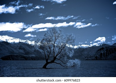 Lake Wanaka Tree in Summer