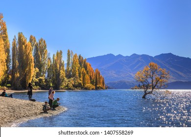 LAKE WANAKA/NEW ZEALAND - APRIL 2019: Tourist enjoyed taking photo of the Lone tree of Wanaka Lake at lakeside against Autumn color of popular trees and blue sky, New Zealand dates on April 17,  2019