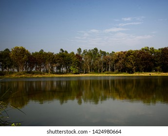 Lake water with trees around the lakeshore area
