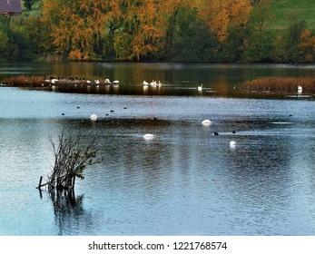 Lake with waterfowl in autumn at Fairburn Ings nature reserve, Yorkshire, England