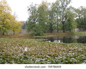 Lake with Water-lily in Mestsky Park, Cesky Krumlov, Czech Republic - Shutterstock ID 709780459