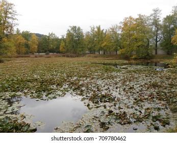 Lake with Water-lily in Mestsky Park, Cesky Krumlov, Czech Republic - Shutterstock ID 709780462