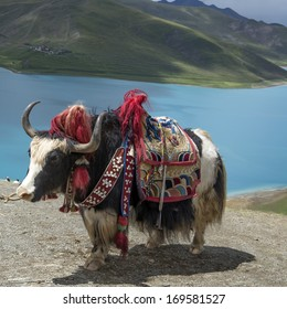 Lakes and yaks in Tibet
