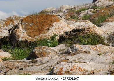 Lakeshore stones and plants