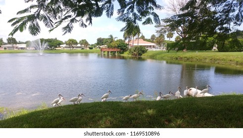 Lakeside flock of birds