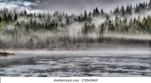 Lakeside forest with dramatic fog