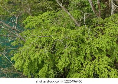 Lakeside fresh green