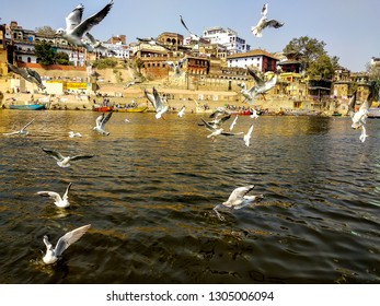 Lalita Ghat, River Ganges, Varanasi, Uttar Pradesh, India; 30-Jan-2019; Siberian migratory birds over river Ganges in Varanasi, Uttar Pradesh, India