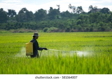 LAM DONG, VIETNAM. May 25, 2015: Farmer spraying pesticide on rice field.