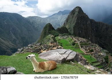 Lama on top of Machu Picchu Peru looking on mountains
