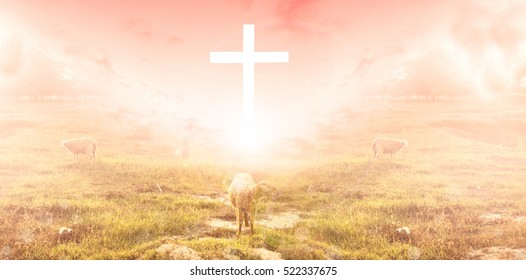 The lamb is in front of the cross