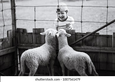 Lambs in discussion with a child separated by a wire fence. Lambs in dialog with a boy. Little boy with lamb on the farm. Conceptual picture for wallpapers, banners, posters and other design projects.