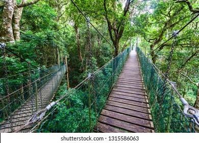 Lamington tree top walk hanging bridges among trees in the jungle in Queensland, Australia