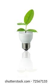 lamp green leaf on white background