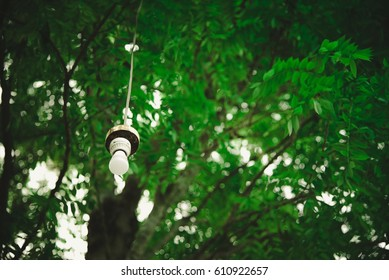 Lamp hanging under the big tree in the garden. vintage tone with vignetting.
