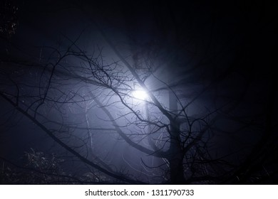 Lamp post shining through tree's branches in fog. Street light's beam in foggy night. Dense fog.