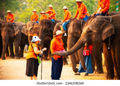 Lampang, elephant,Thailand - Group of elephant eating fruit in national Thai elephant day at The Thai Elephant Conservation Center Lampang, Hang Chat, Lampang, Thailand on March 13, 2019.