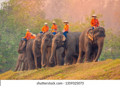 Lampang, elephant,Thailand - Group of elephant eating fruit in national Thai elephant day at The Thai Elephant Conservation Center Lampang, Hang Chat, Lampang, Thailand on March 13,2019