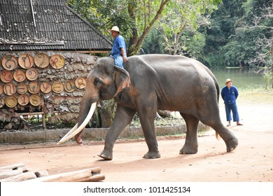 Lampang province Thailand , Dec 31 , 2017 : Elephant show in Lampang province Thailand