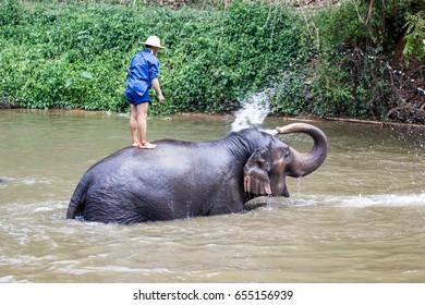 Lampang Thailand  April 13, 2017 : Thailand Elephant Conservation Centre  -  Activities Elephant Bath   Elephant Bath  Naturally, like an elephant bath for cooling