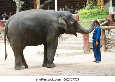 LAMPANG, THAILAND - April 13, 2017:- The Thai Elephant Conservation Center (TECC), Mahouts show how to train an elephant, Train elephants to wear a hat for men.