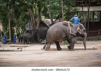 LAMPANG, THAILAND - JUNE 8 : Daily elephant show at The Thai Elephant Conservation Center (TECC), Mahout show how to train elephant in forestry industry. June 8 ,2015 in Lampang, Thailand.