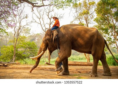 LAMPANG, THAILAND - MARCH. 13 The mahout and elephant go rest after show.They have show twice in day. In The Thai Elephant Conservation Center (TECC) at Lampang. MARCH 13, 2019 in Lampang, Thailand.