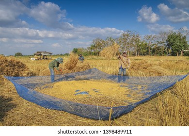 Lampang -THAILAND, Nov. 25, 2011 : Thai Farmer Thresh Paddy Rice into a big net with paddy field and blue sky background, Thai farmer in Lampang, northern of Thailand.