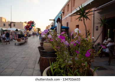 LAMPEDUSA, ITALY - JULY, 31: Flowers pot in the Lampedusa street, Sicilian island in the middle of the mediterranean sea on July 31, 2018