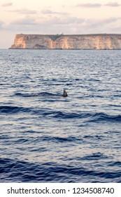 Lampedusa's beautiful image