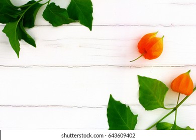 Lampion flower on white wood background