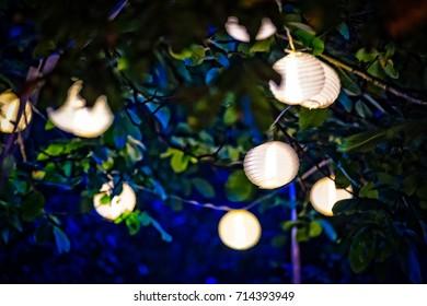 Lampions on the tree.